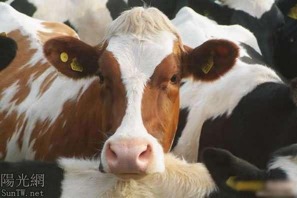 奶牛放屁航班被迫降落