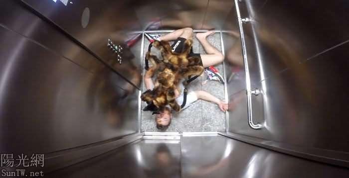 一隻狗穿上蜘蛛外套,在波蘭到處奔跑嚇唬人--陽光網