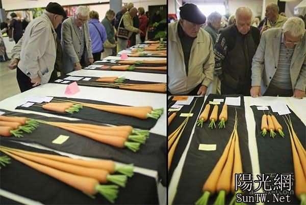 9種破紀錄的巨型蔬菜--陽光網