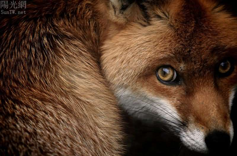 13野外捕捉动物们的非凡时刻