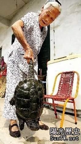 農民犁地竟犁出一隻500歲巨型美洲龜