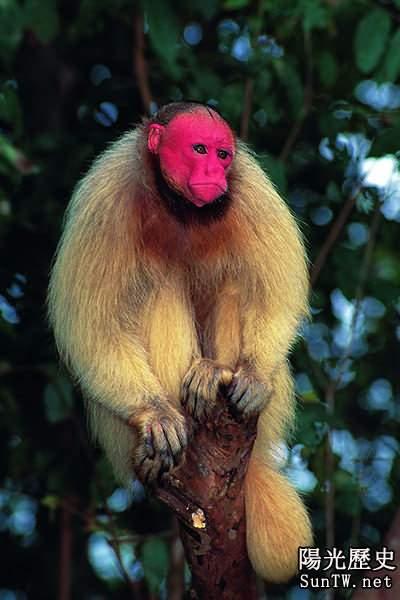 萌到極致!自然界十種最罕見粉色動物