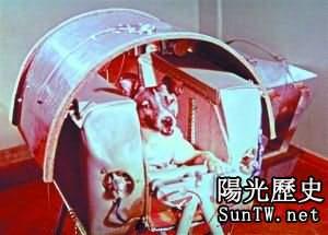 飛向太空的動物宇航員:太空狗被嚇死