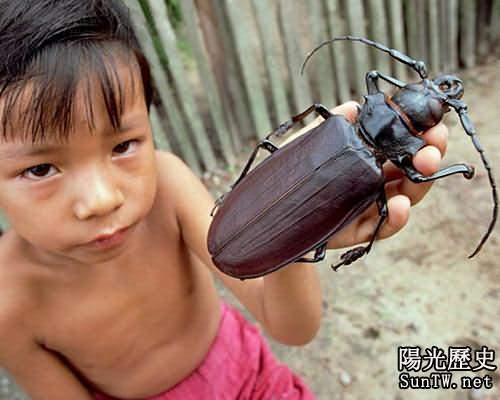 盤點世上現存昆蟲界中的十大龐然大物