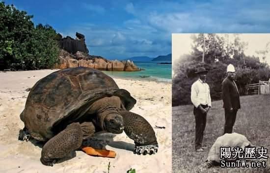 塞舌爾巨龜182歲高齡 或成最長壽動物
