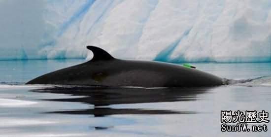 太震撼了:破解南冰洋怪異聲音之謎