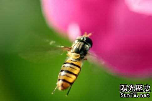 揭示十大科學之謎第一位蜜蜂飛行之謎