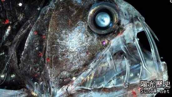 醜陋海洋魚類大比拚 深海毒蛇魚奪魁