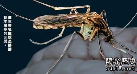 澳大利亞男子被蚊子叮咬後竟離奇失憶