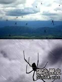 澳大利亞一小鎮下起蜘蛛雨 數量超百萬