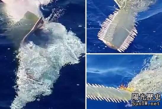 水域驚現4.2米神獸 嘴如電鋸長滿牙齒