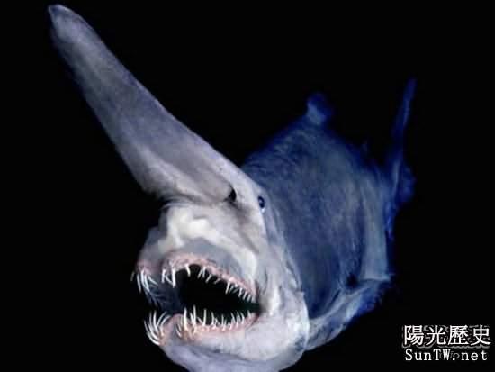 遠古最恐怖動物大盤點 你見過幾種?