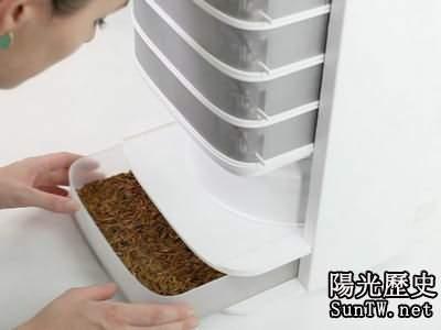 營養豐盛的黃粉蟲午餐你敢嘗試嗎?