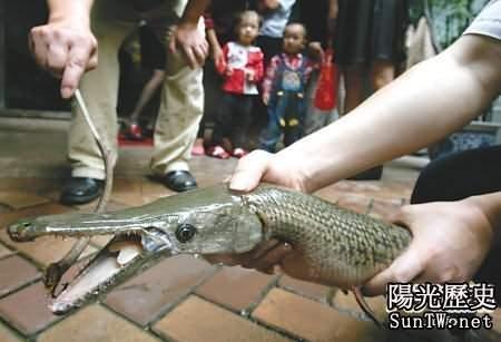 四川怪魚:最長6米 竟吃人