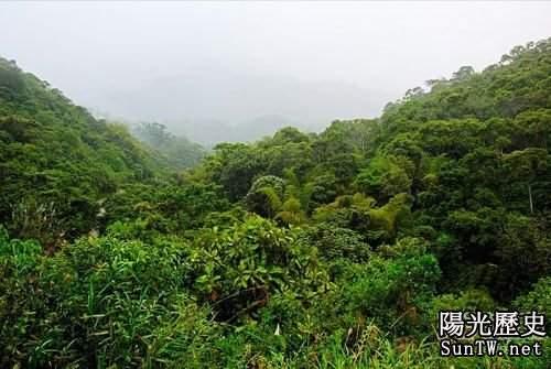 馬達加斯加島上的荒野叢林