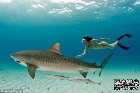 實拍:比基尼美女與食人鯊零距離接觸