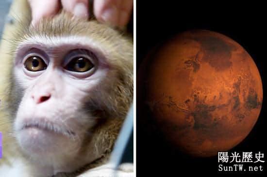 俄訓練4隻猴解數學題用操控桿:計劃2017送火星